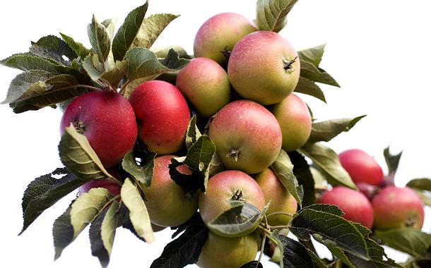Äpplen1